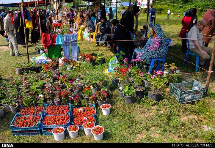 جشنواره بومی محلی «توت فرنگی» برگزار میشود