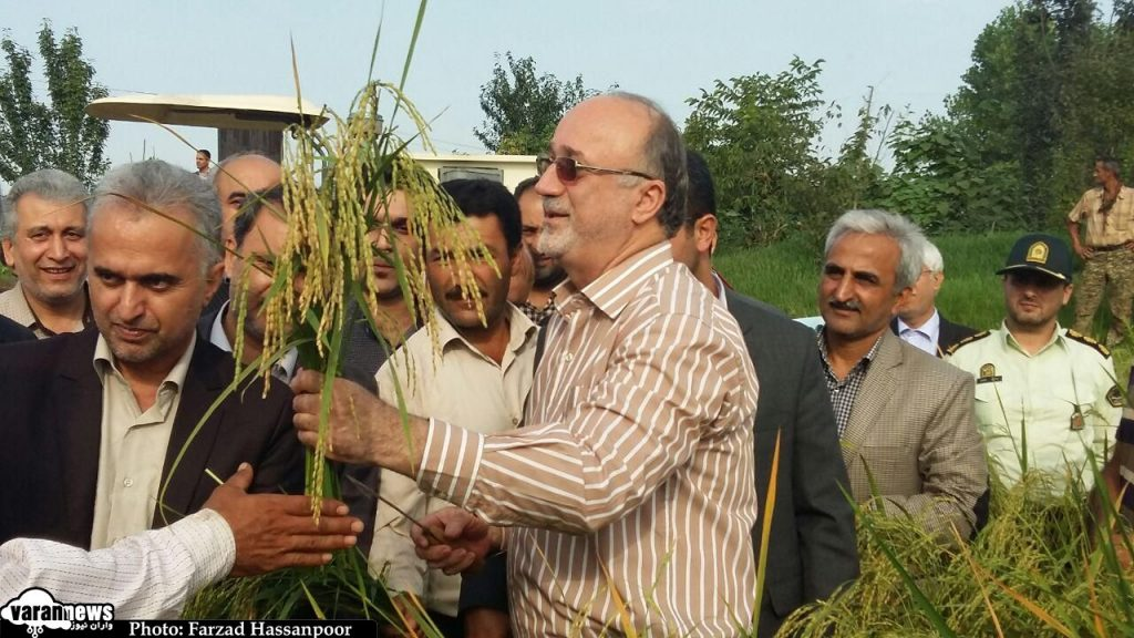 نخستین برداشت مکانیزه برنج از مزارع گیلان با حضور استاندار انجام شد