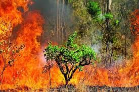 احتمال وقوع آتشسوزی در جنگلهای شمال کشور