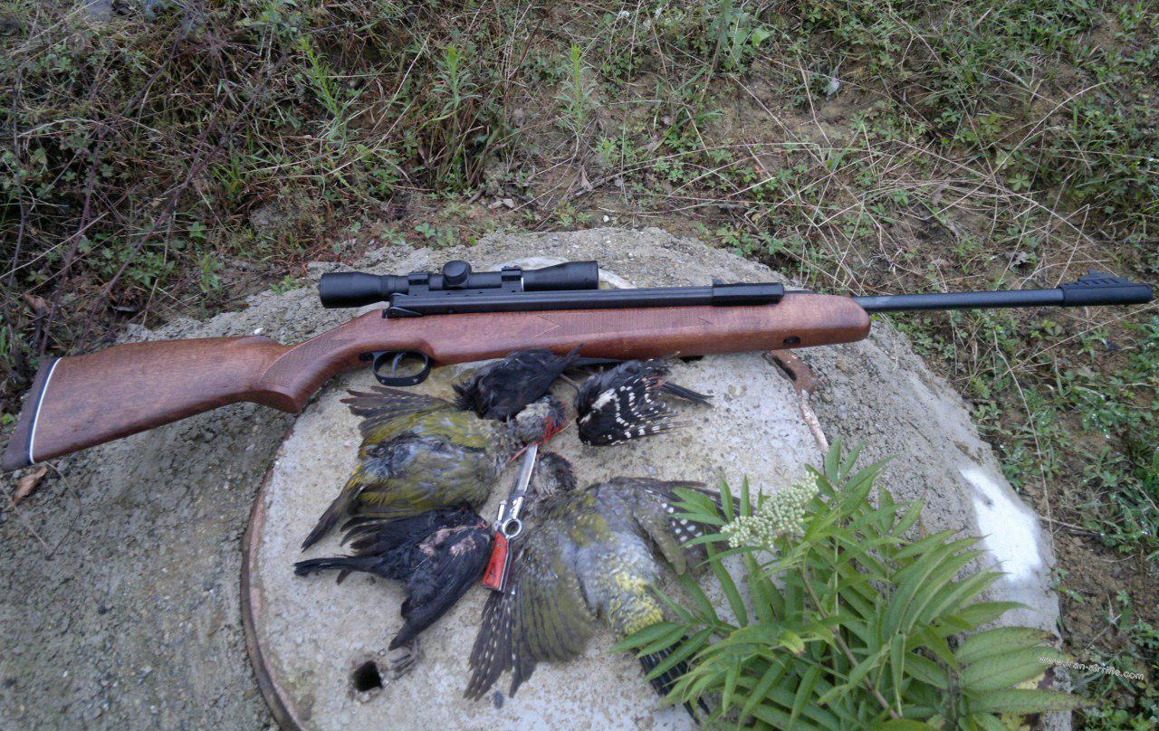 شکار هر نوع پرنده در استان گیلان ممنوع شد