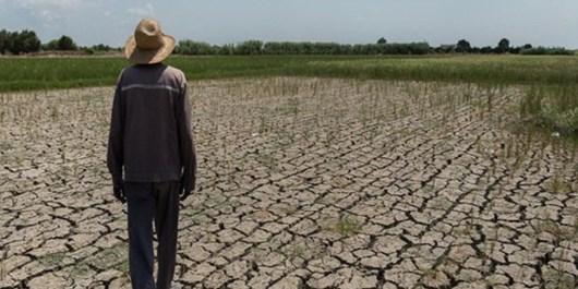 برنجکاران استان از خشکی شالیزارها بحران را فریاد میکشند/عدم پاسخگویی مدیرعامل آب منطقهای گیلان