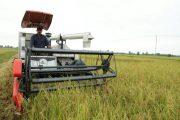 نخستین برداشت مکانیزه برنج گیلان در صومعهسرا انجام شد