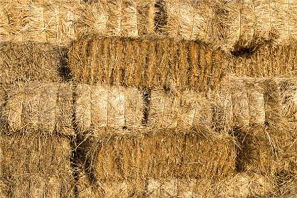 خرید کاه و کلش کشاورزان توسط اتحادیه دامداران گیلان