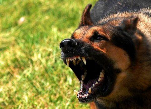 پیرزن گیلانی با حمله سگ تکه پاره شد