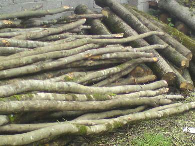 کشف ۵ تن چوب جنگلی قاچاق در فومن